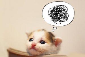 落とし穴 子猫がイライラ